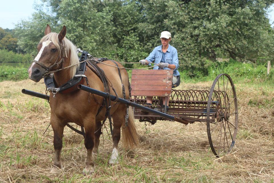 travaux-agricoles