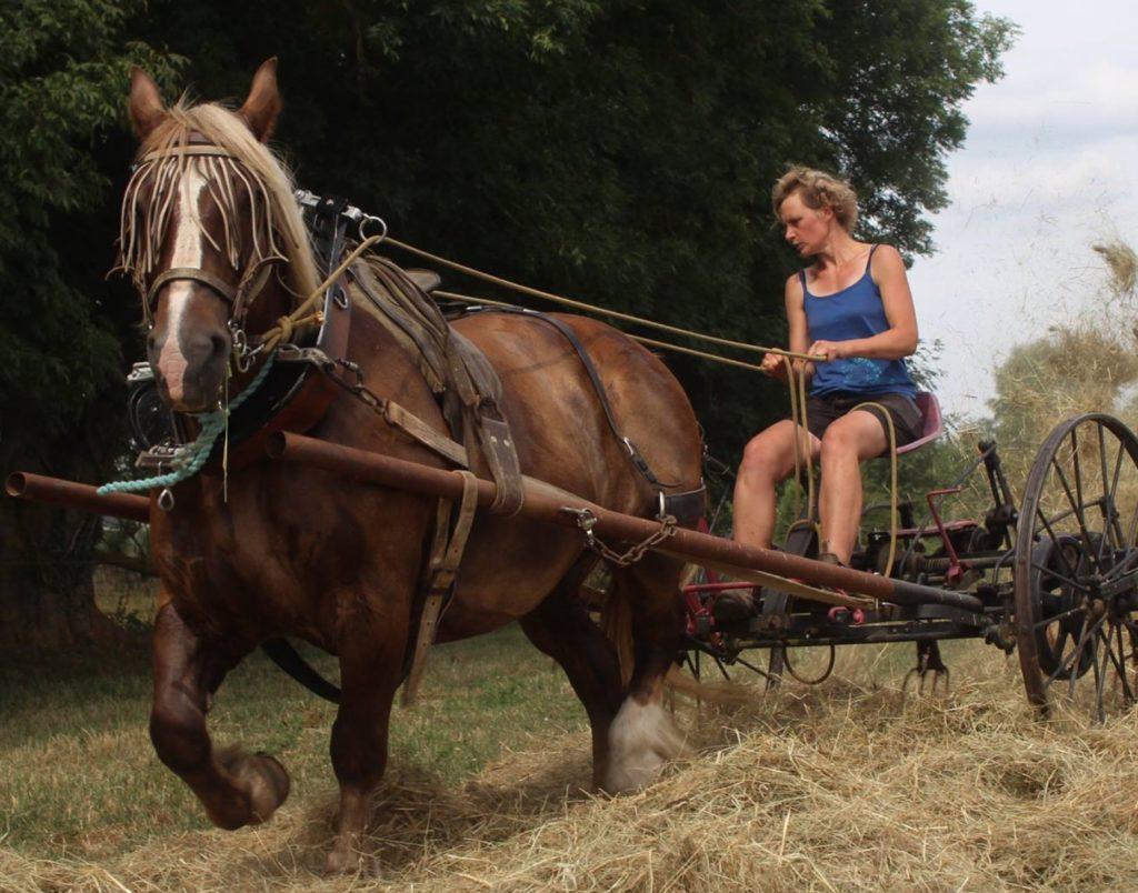 traction-animale-faneuse-aux-coul-eure-du-cheval
