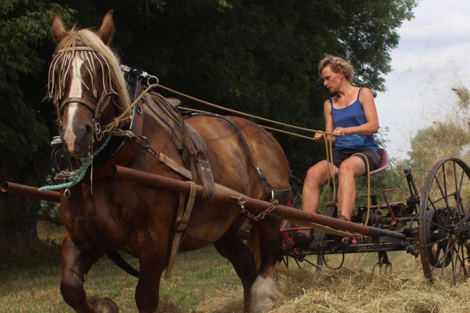 traction-animale-faneuse-aux-coul-eure-du-cheval_3